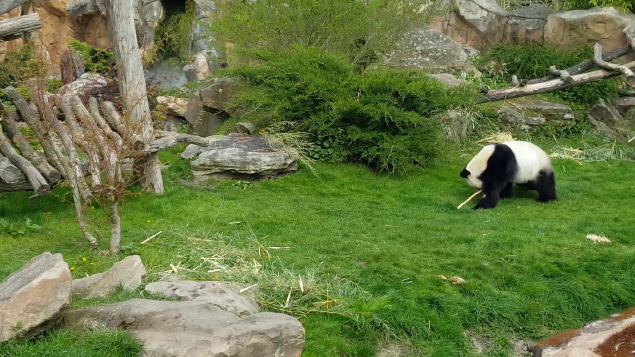 Une journée au Zoo de Beauval