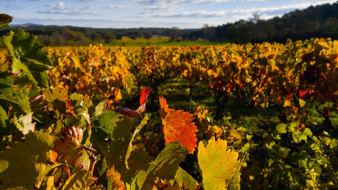Vignobles et Viticulteur