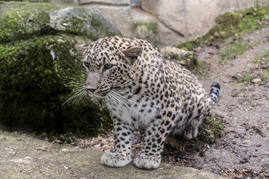 Zoo Parc de Beauval