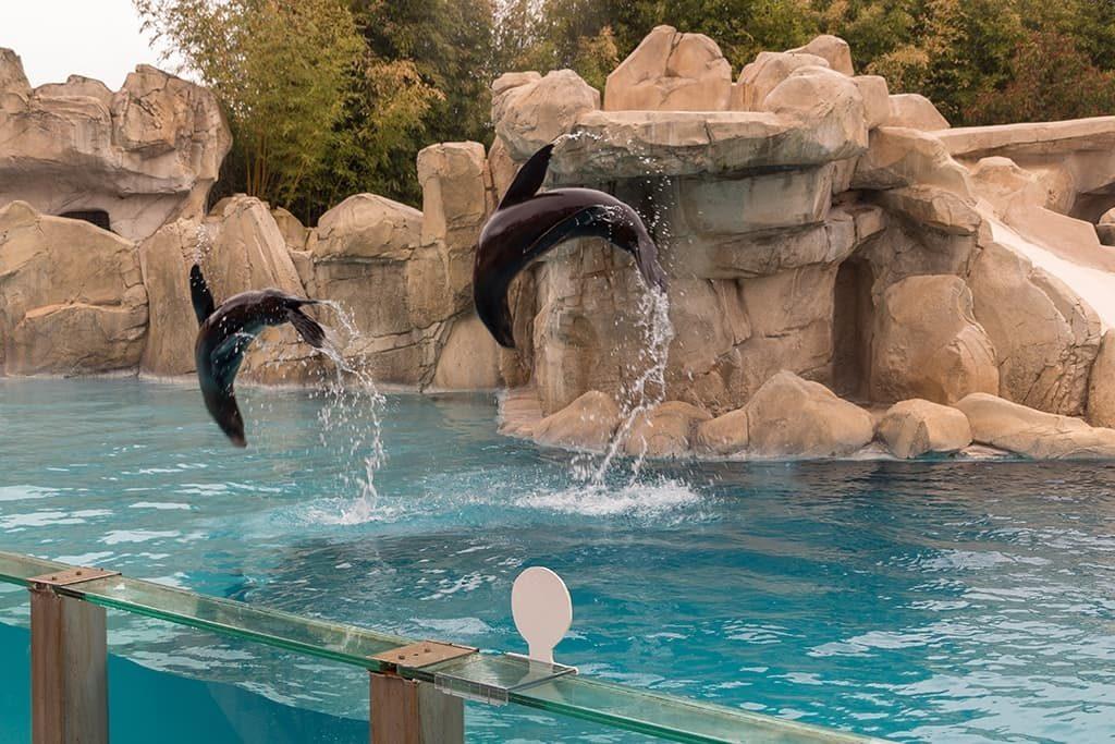 Spectacle aquatique zoo de Beauval